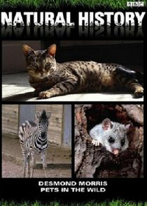 Pets in the Wild Ne Zaman?'