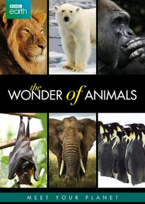 The Wonder of Animals Ne Zaman?'