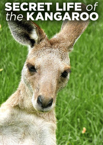 Secret Life of the Kangaroo Ne Zaman?'