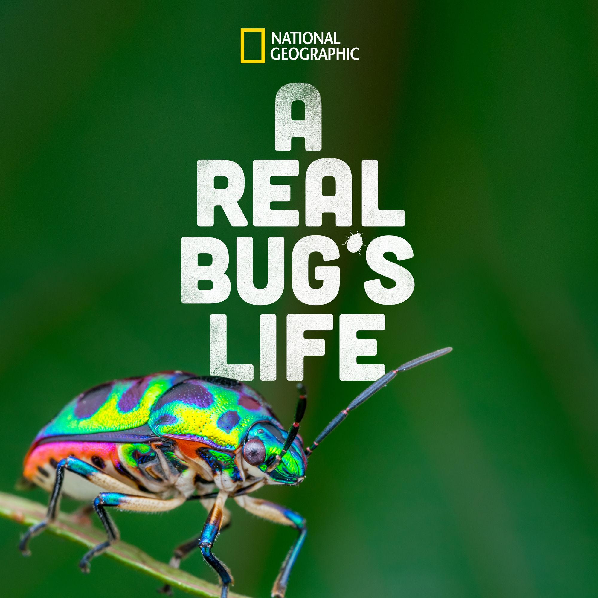 A Real Bug's Life ne zaman
