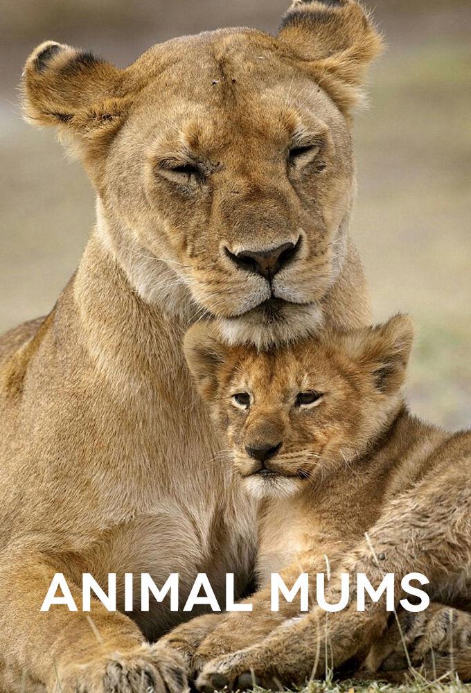 Animal Mums ne zaman