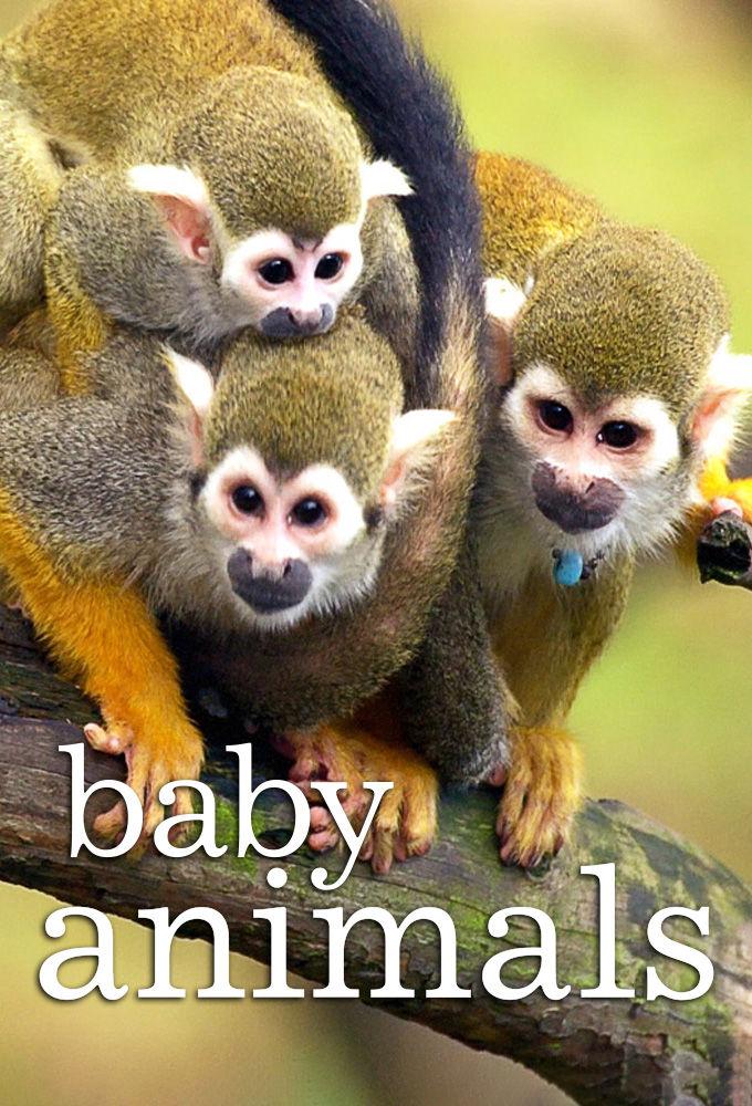 Baby Animals ne zaman