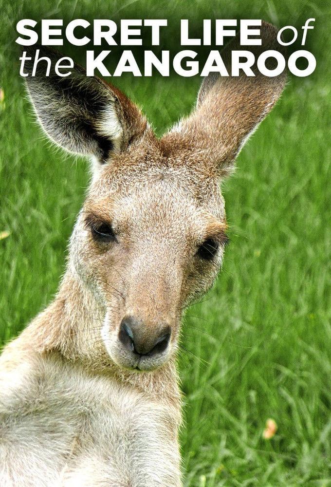 Secret Life of the Kangaroo ne zaman
