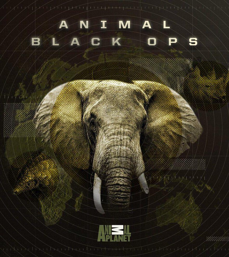 Animal Black Ops ne zaman