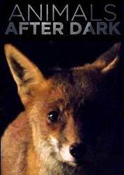 Animals After Dark ne zaman