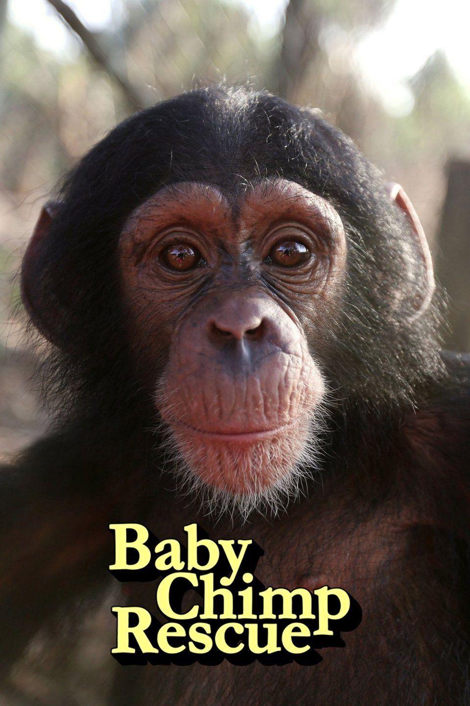Baby Chimp Rescue ne zaman