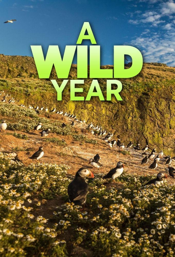 A Wild Year ne zaman