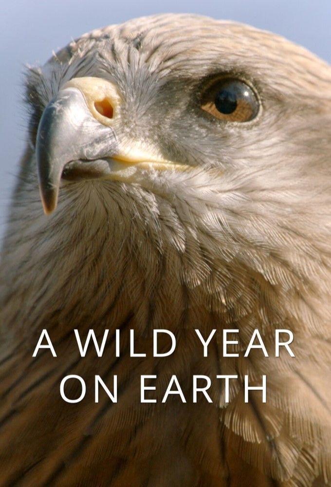 A Wild Year On Earth ne zaman