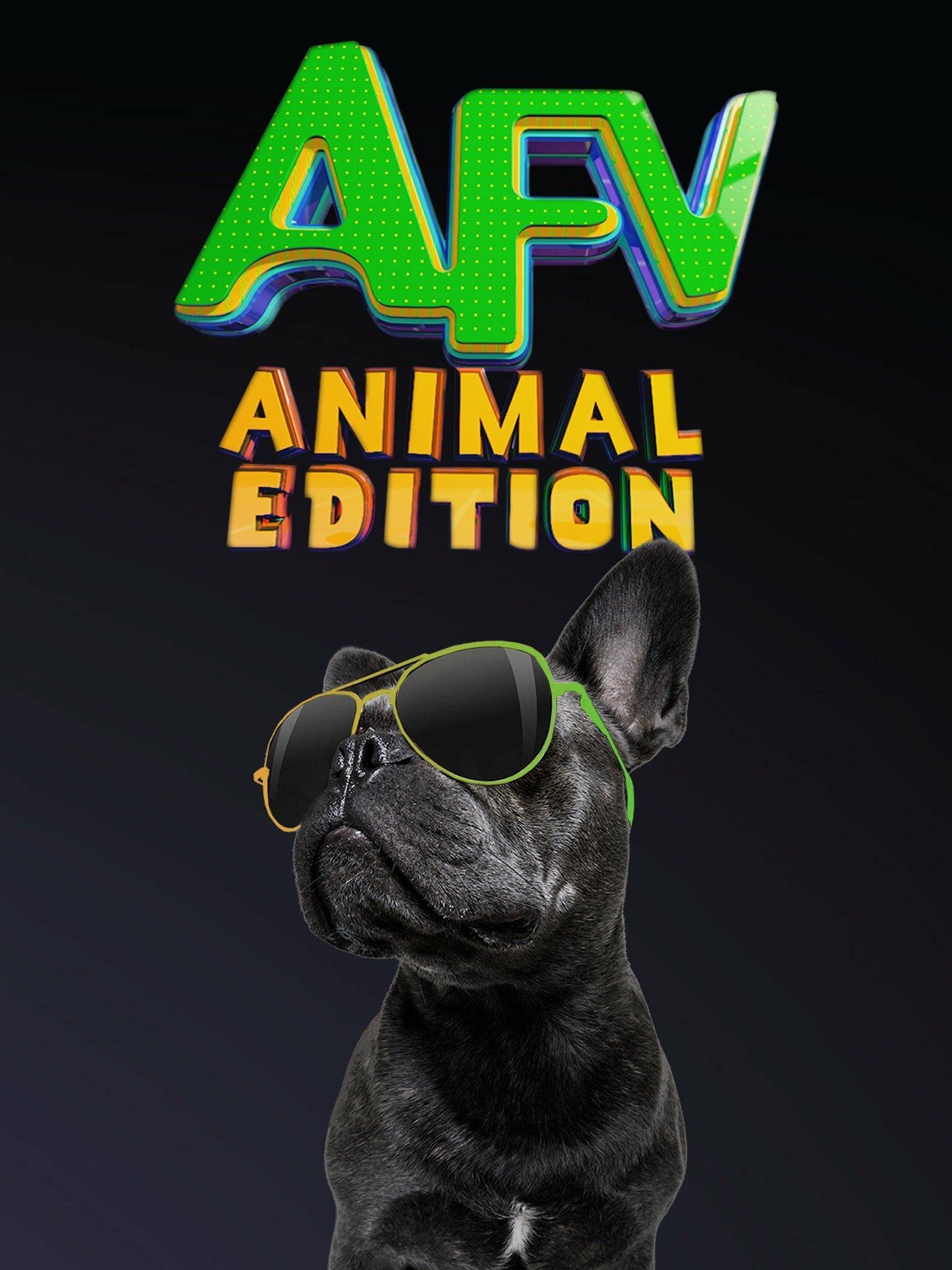 America's Funniest Videos: Animal Edition ne zaman